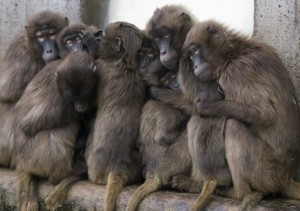 Ethiopia's endangered species recover