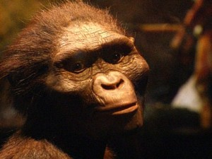 `Lucy' species used stone tools, fossil study says